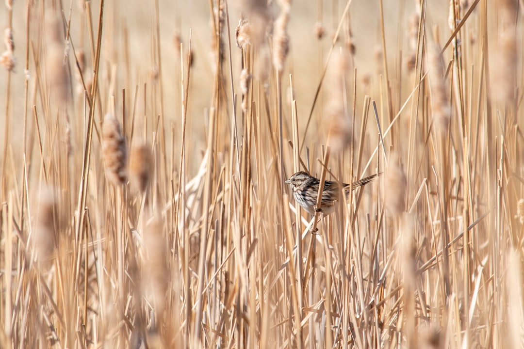 Brown and Black Butterflies On Brown Grass During Daytime - unsplash