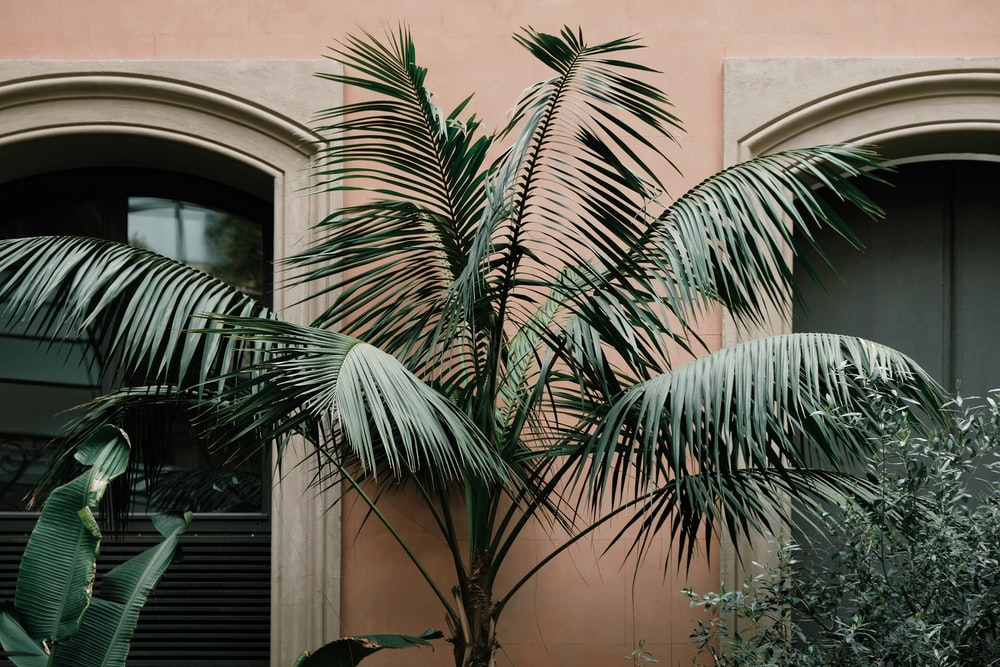 green palm plant near brown concrete building