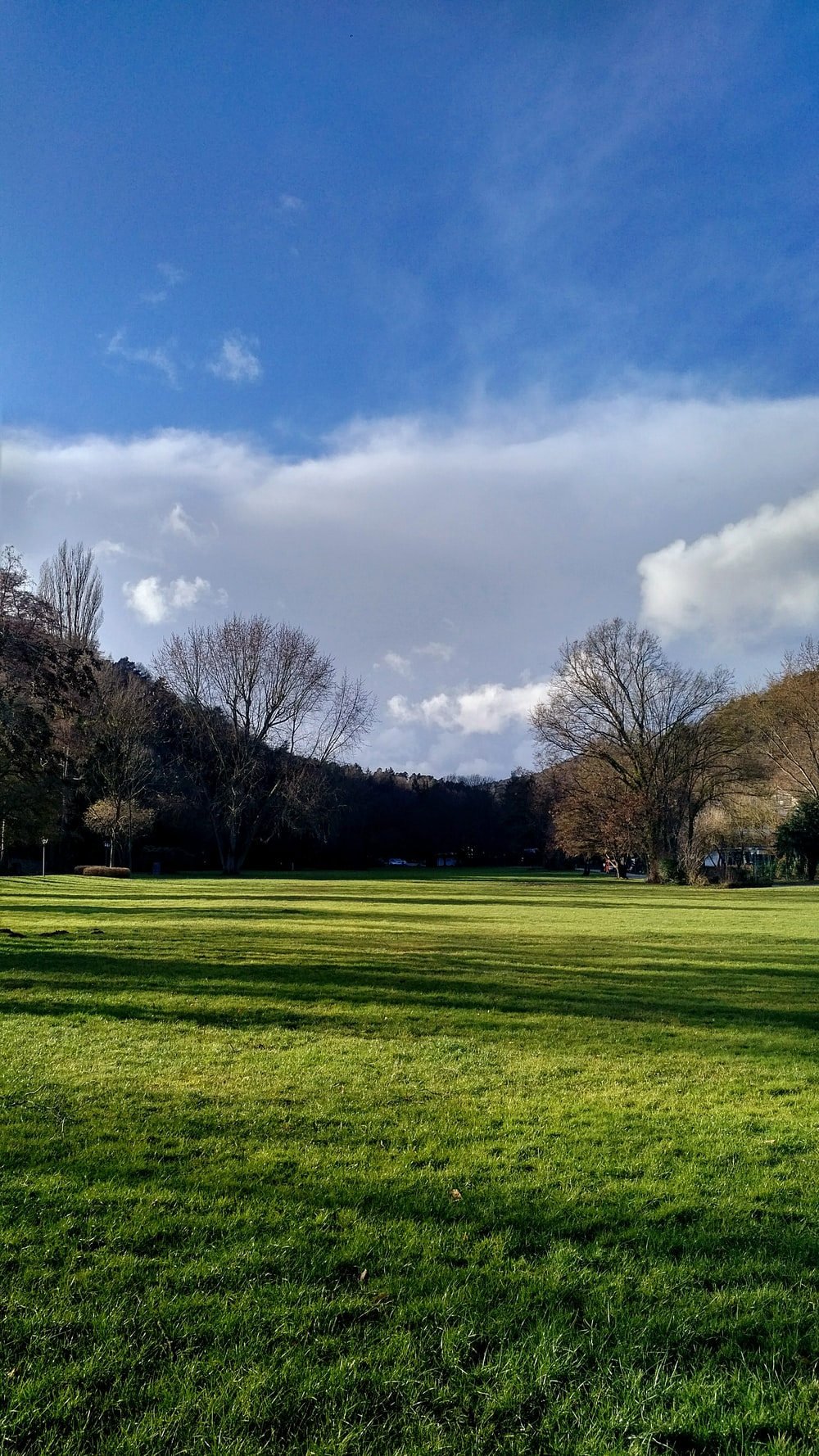 green grass field with leafless trees under blue sky and white clouds during daytime