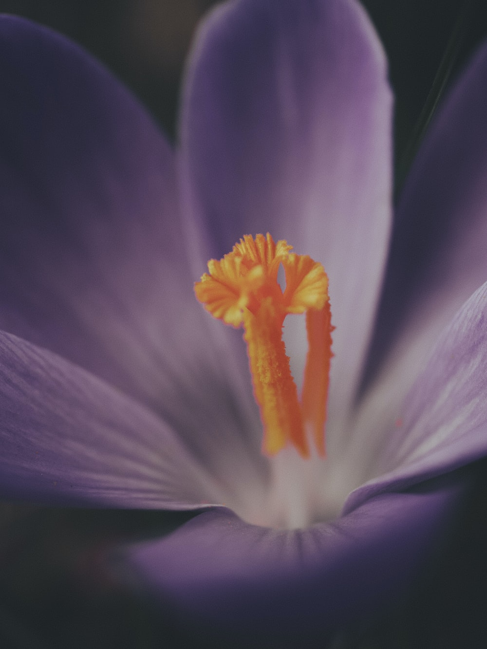 purple and yellow flower in macro photography