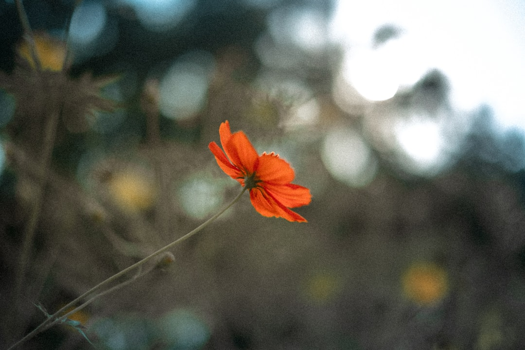 Flower - unsplash