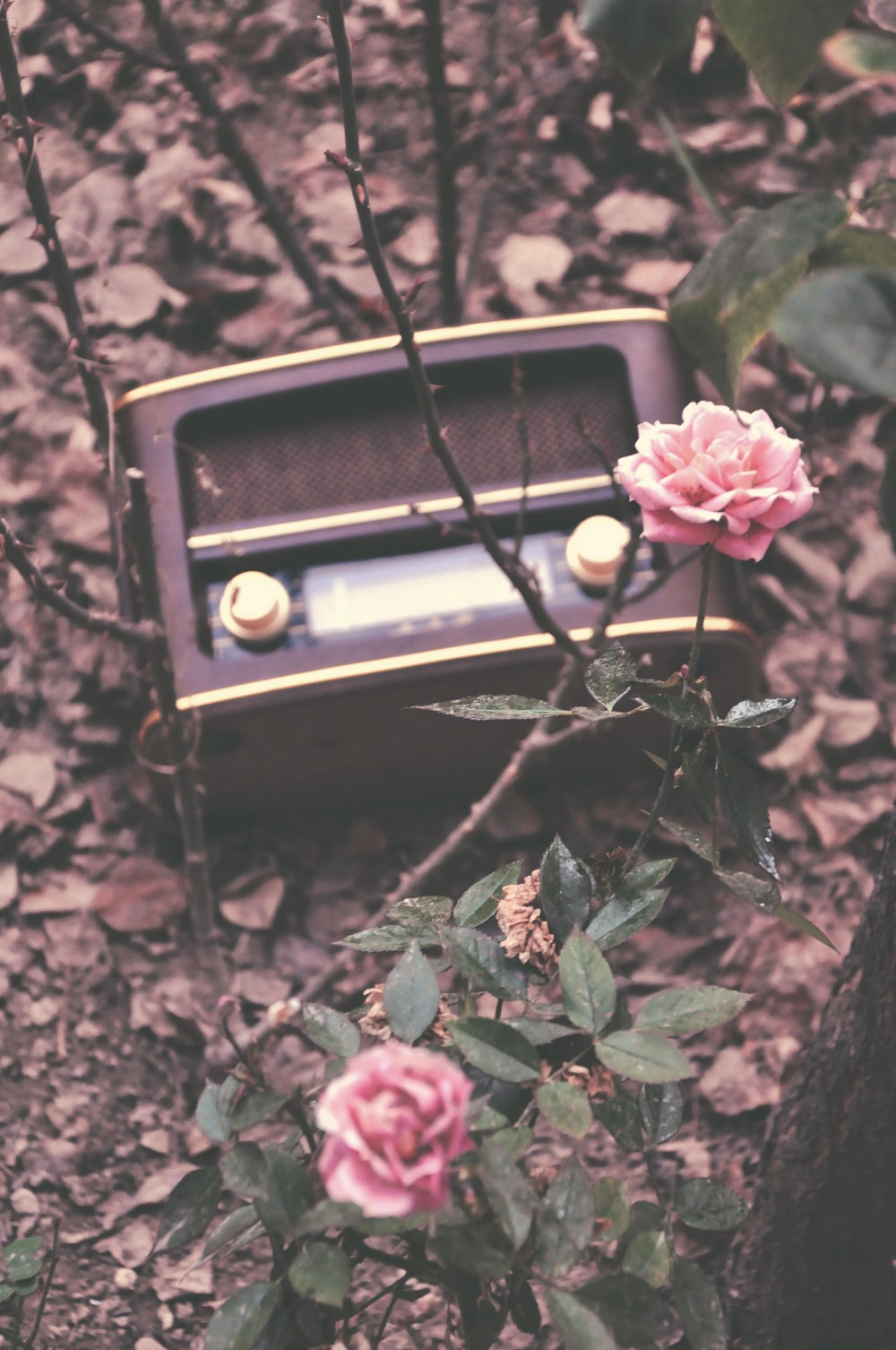 pink flowers beside brown and black radio