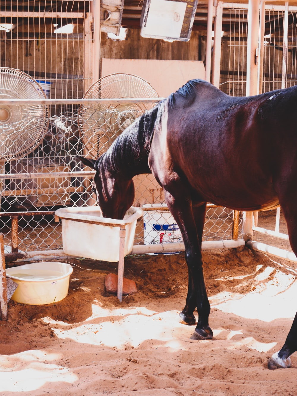 brown horse drinking water from white plastic container