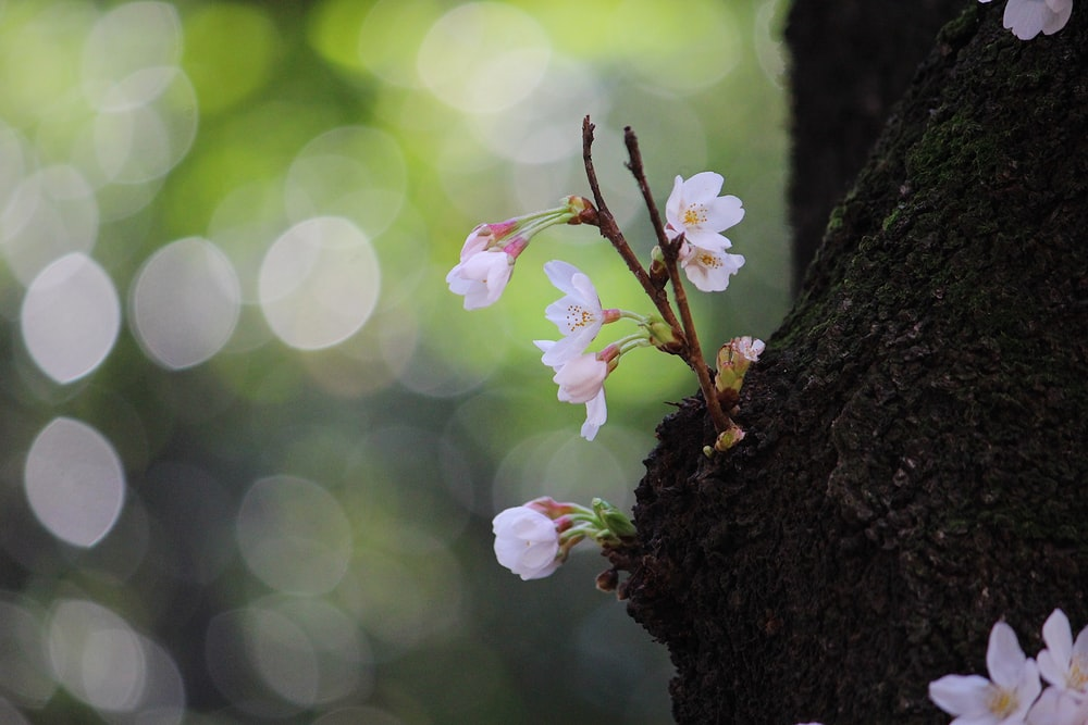 white flowers on brown tree trunk