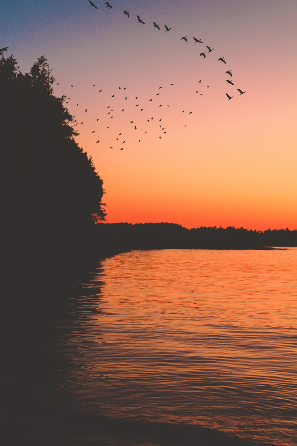 silhouette of birds flying over the lake during sunset