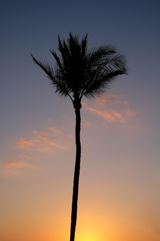palm tree under orange sky during sunset