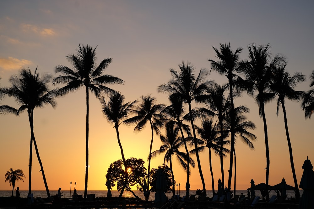 people walking on sidewalk near palm trees during sunset
