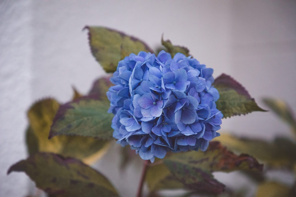 blue flower in tilt shift lens