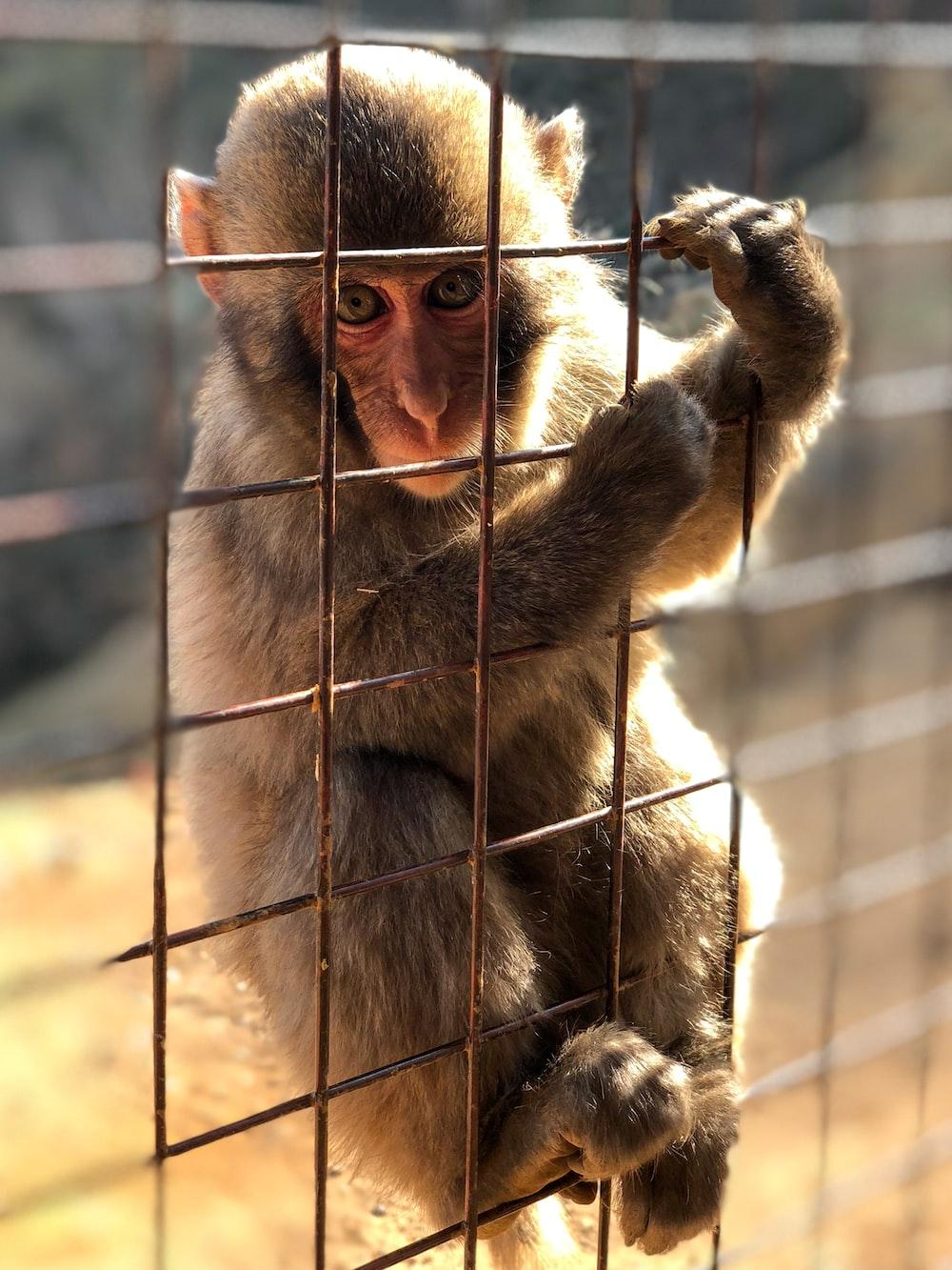 brown monkey on black metal cage