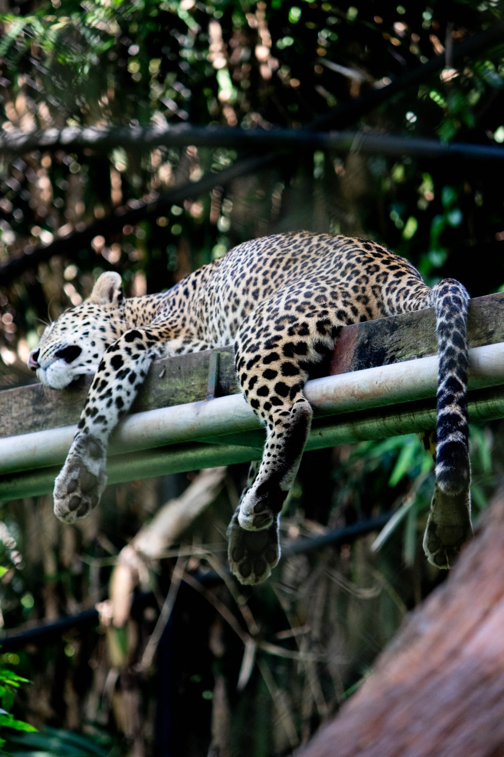 leopard on green wooden fence during daytime