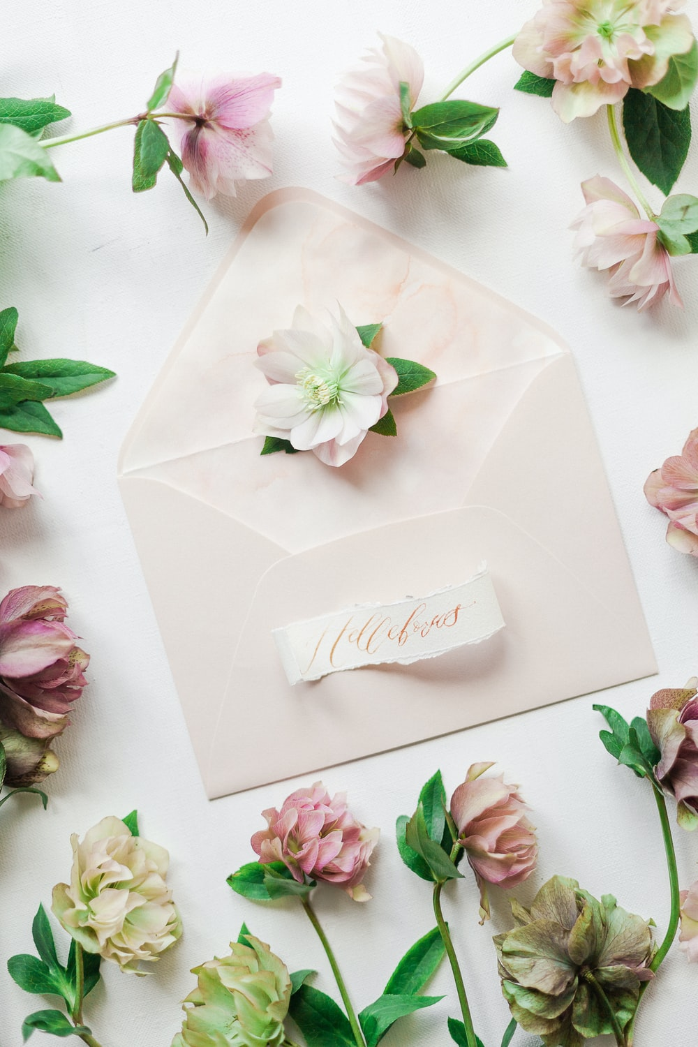 white and pink rose petals on white paper