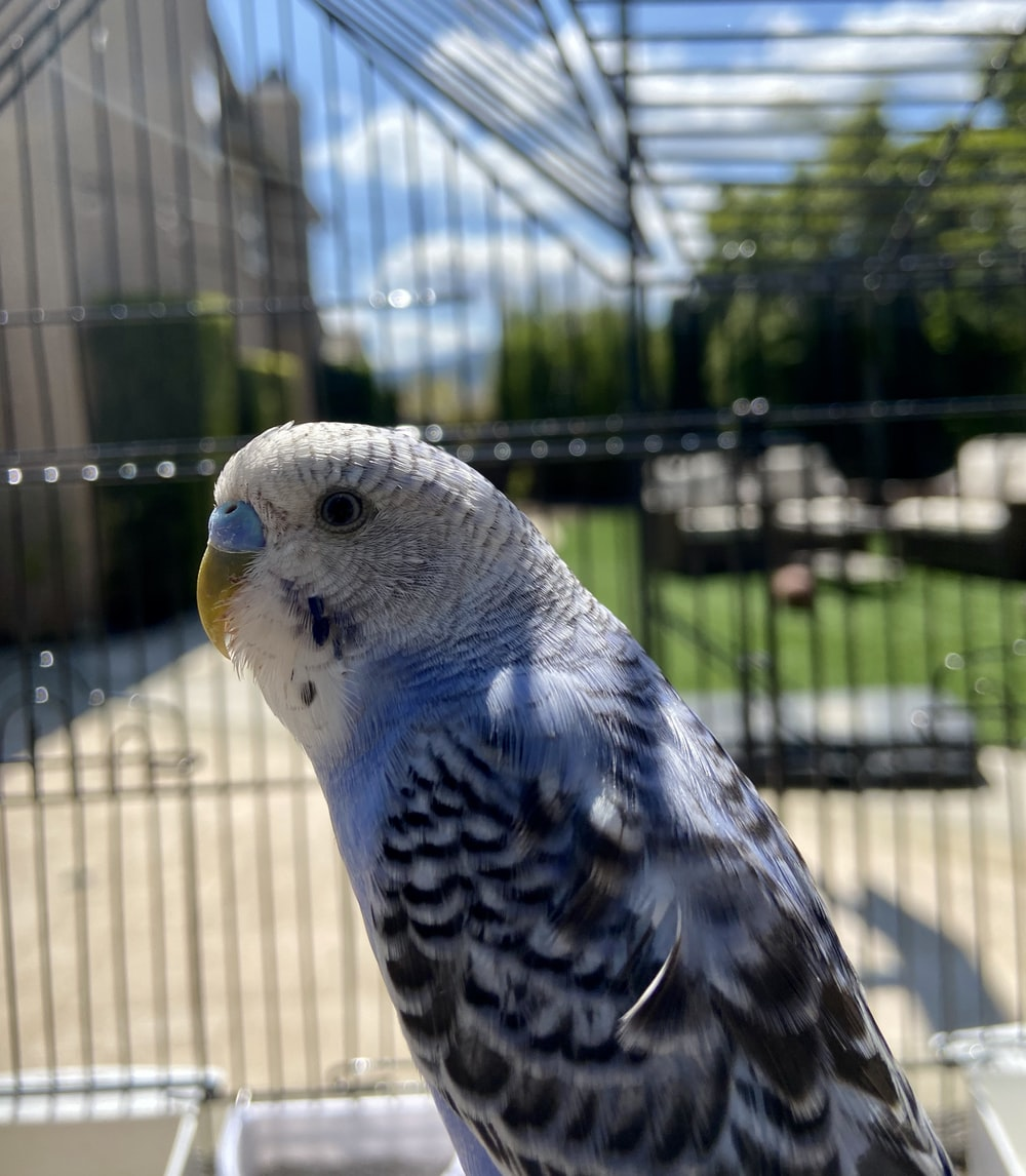 white and blue bird on cage