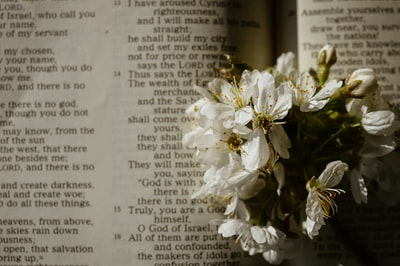 white flowers on book page good friday zoom background