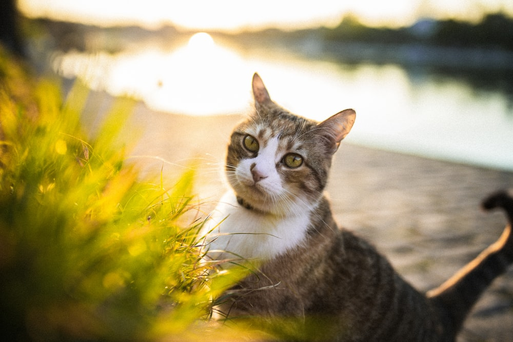 brown tabby cat on yellow and white flower