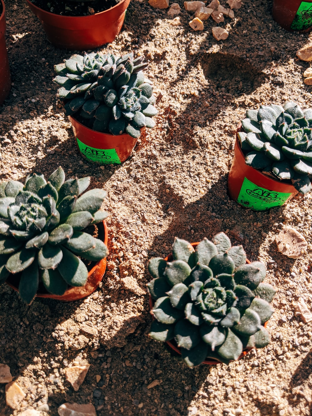 green succulent plant on brown clay pot