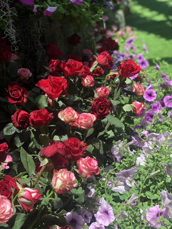 Rose garden at Bern