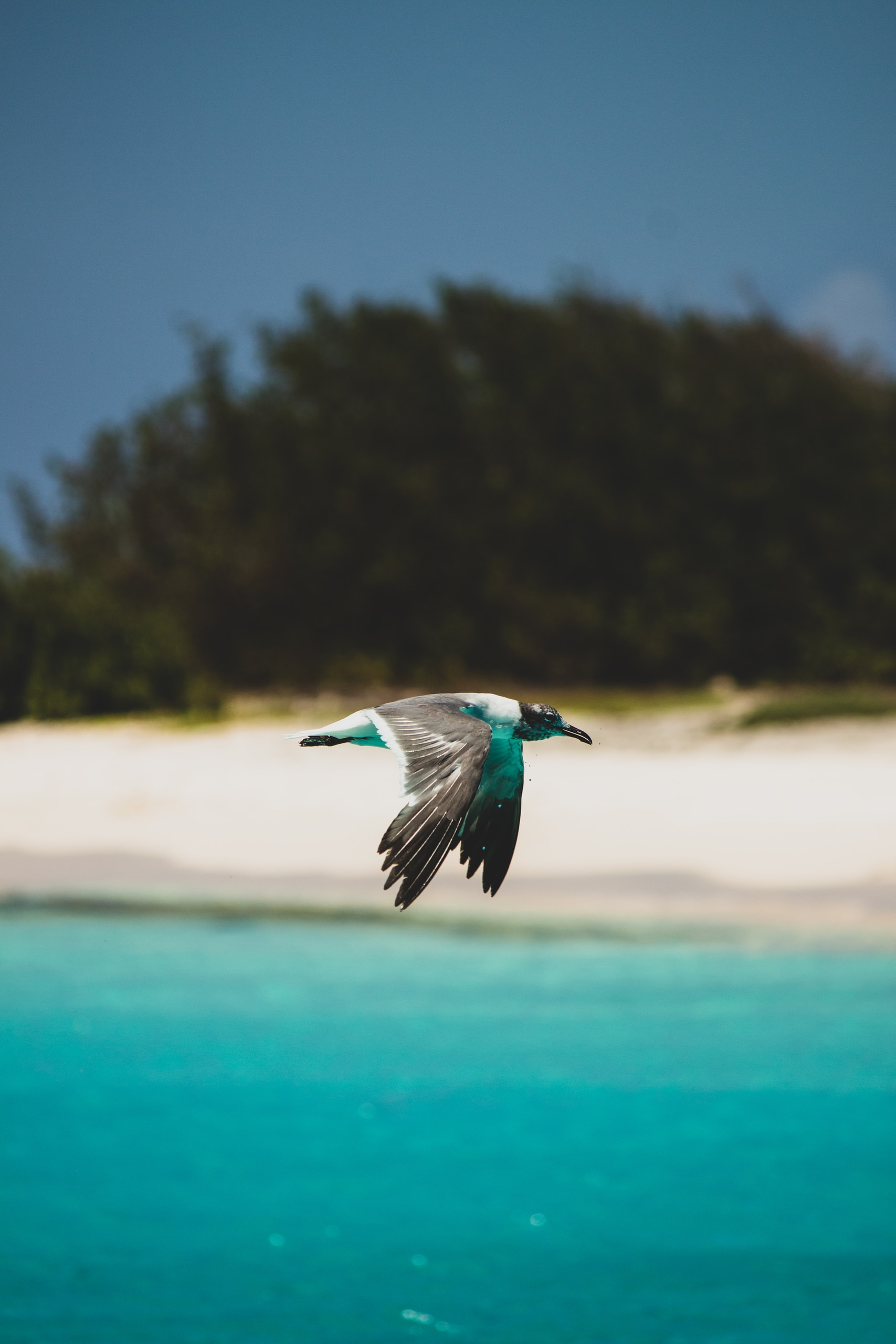 blue and white bird flying over the sea during daytime