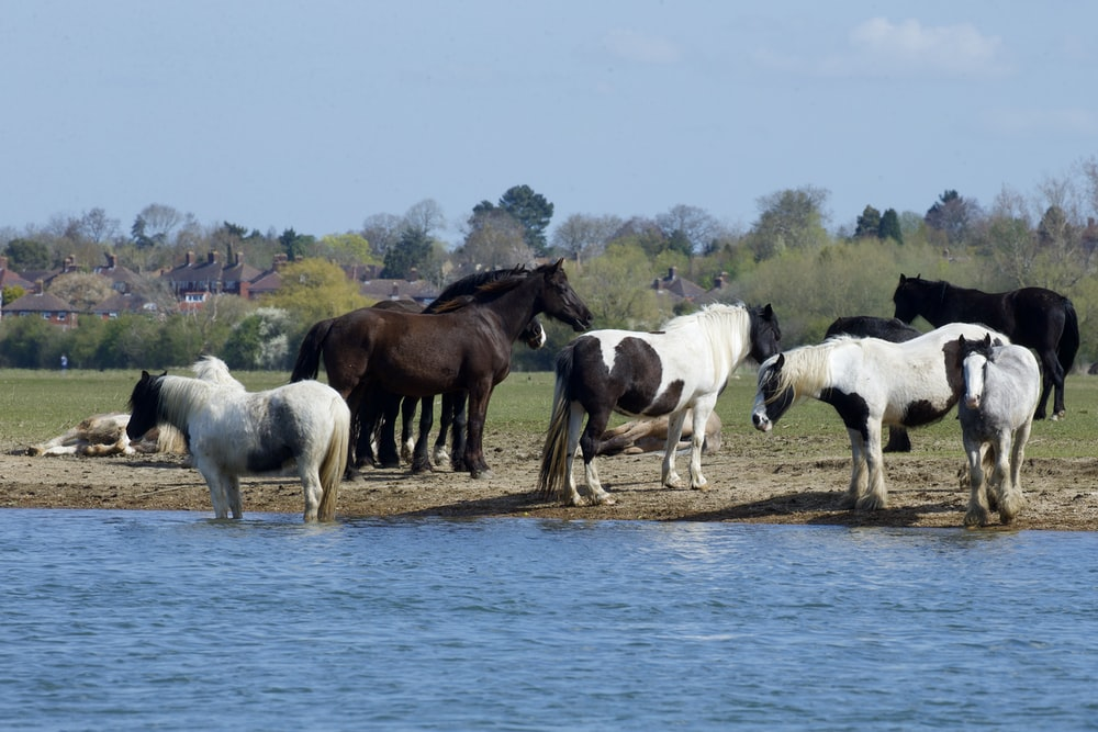 white and brown horses on blue water during daytime