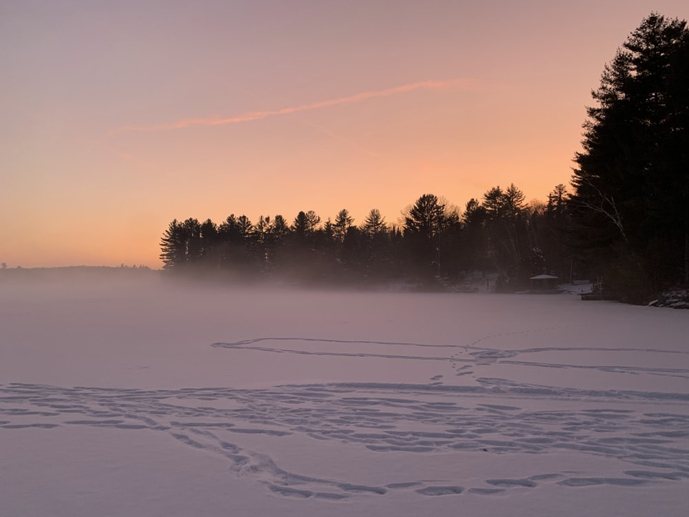 trees on snow covered ground during sunset