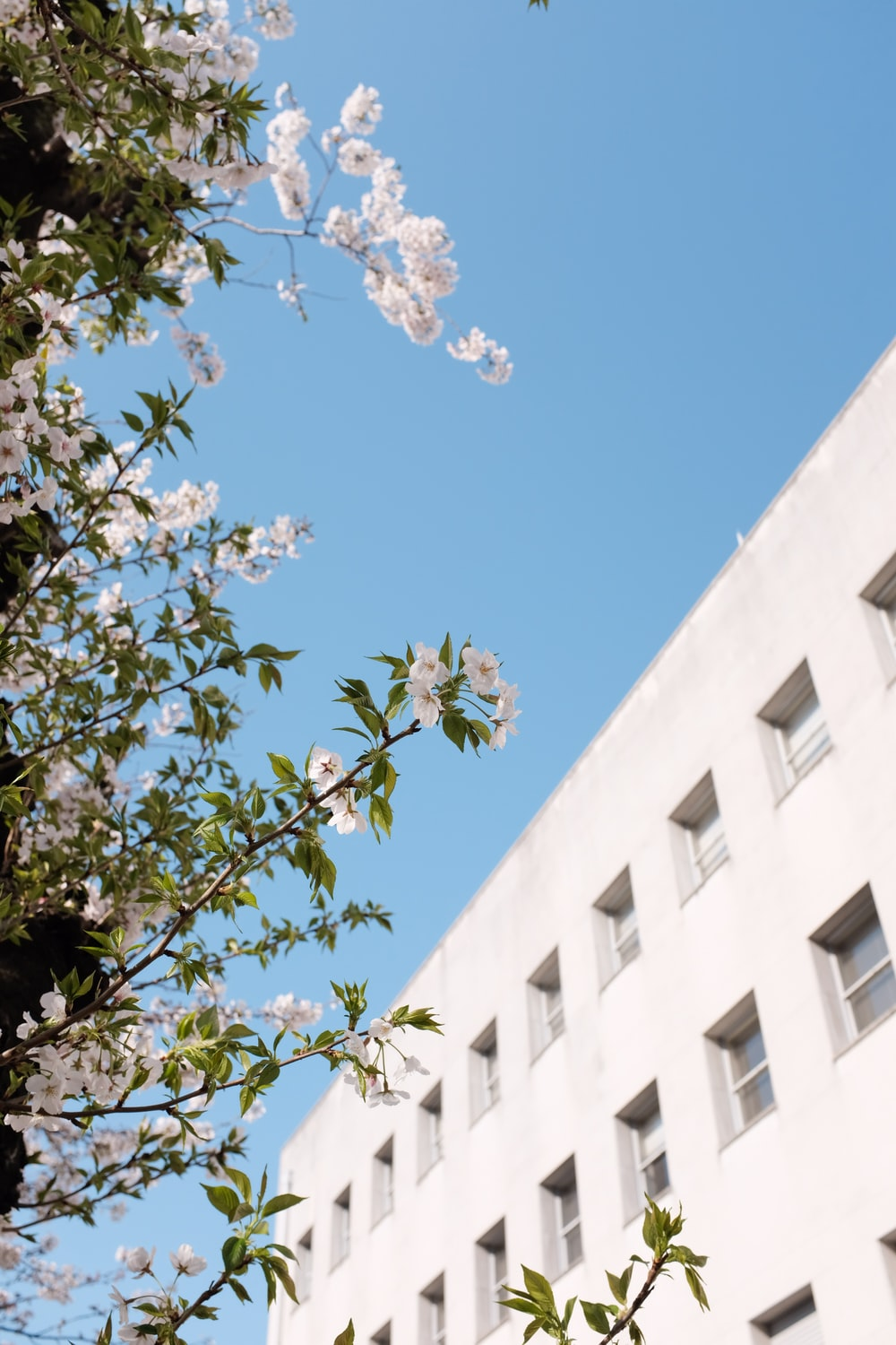 white concrete building with green leaves during daytime
