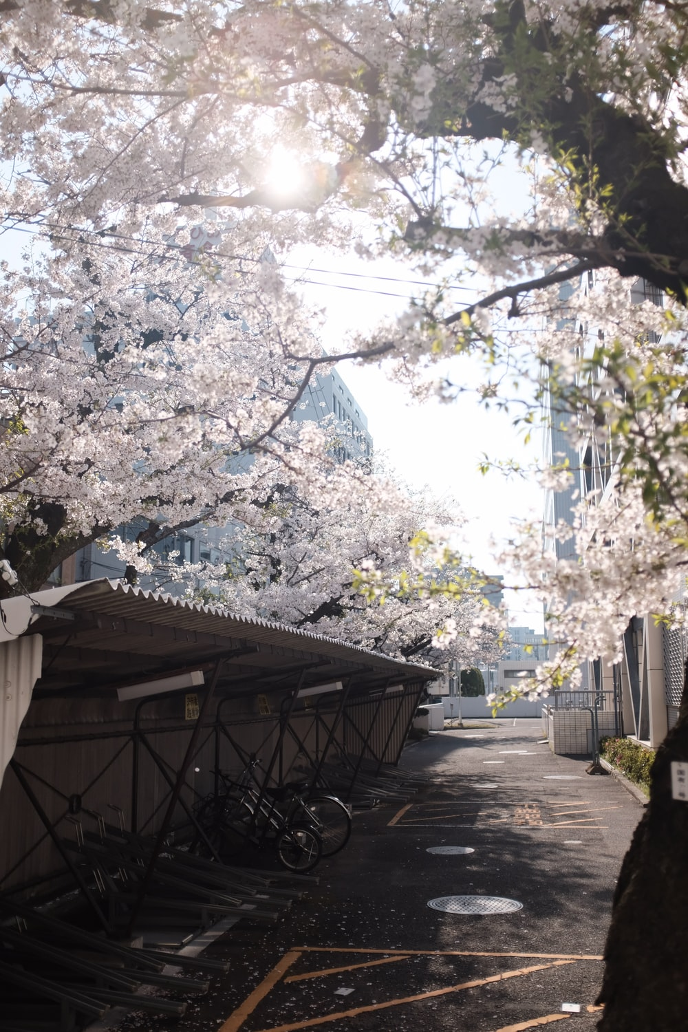 brown wooden table under white cherry blossom tree during daytime