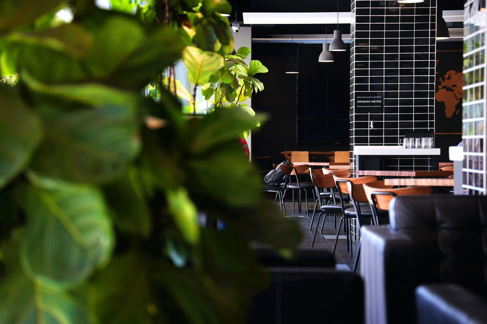 green leaf plant near brown wooden table and chairs