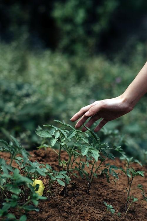 homegrown medicine