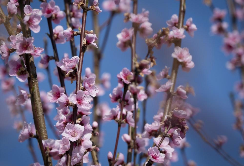 pink flowers in macro shot