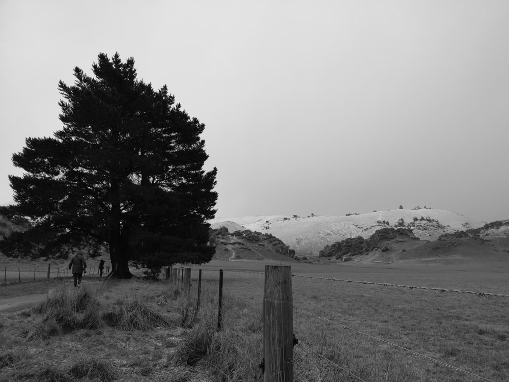 grayscale photo of trees near mountain