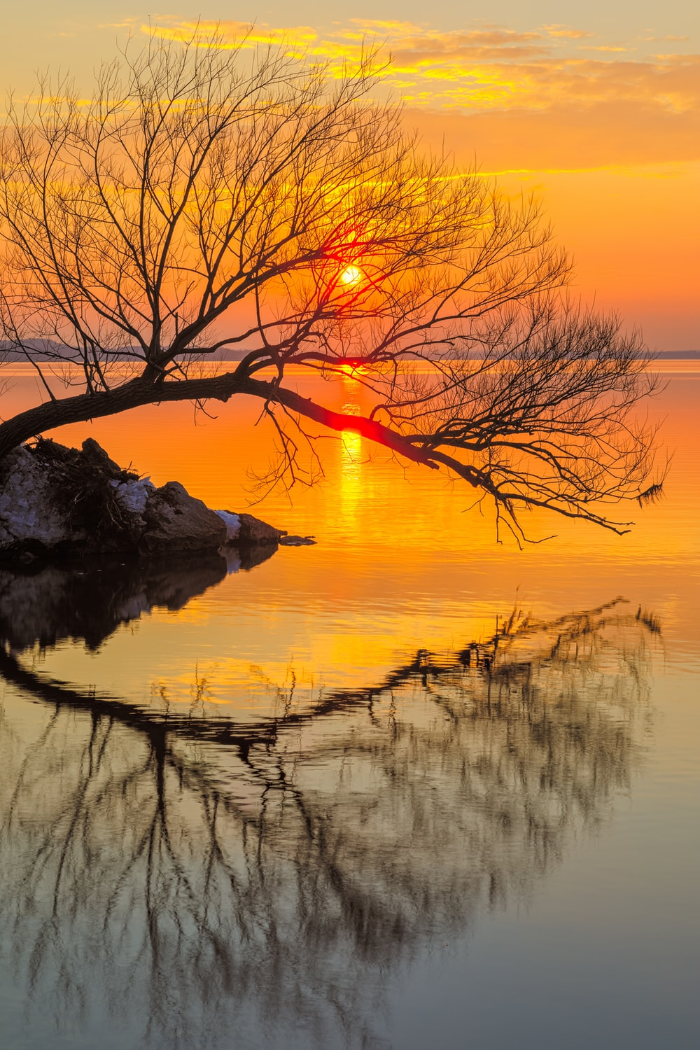 leafless tree on water during sunset