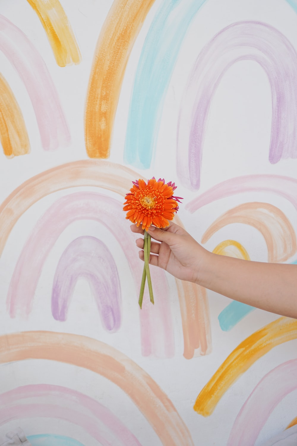 person holding pink and yellow flower