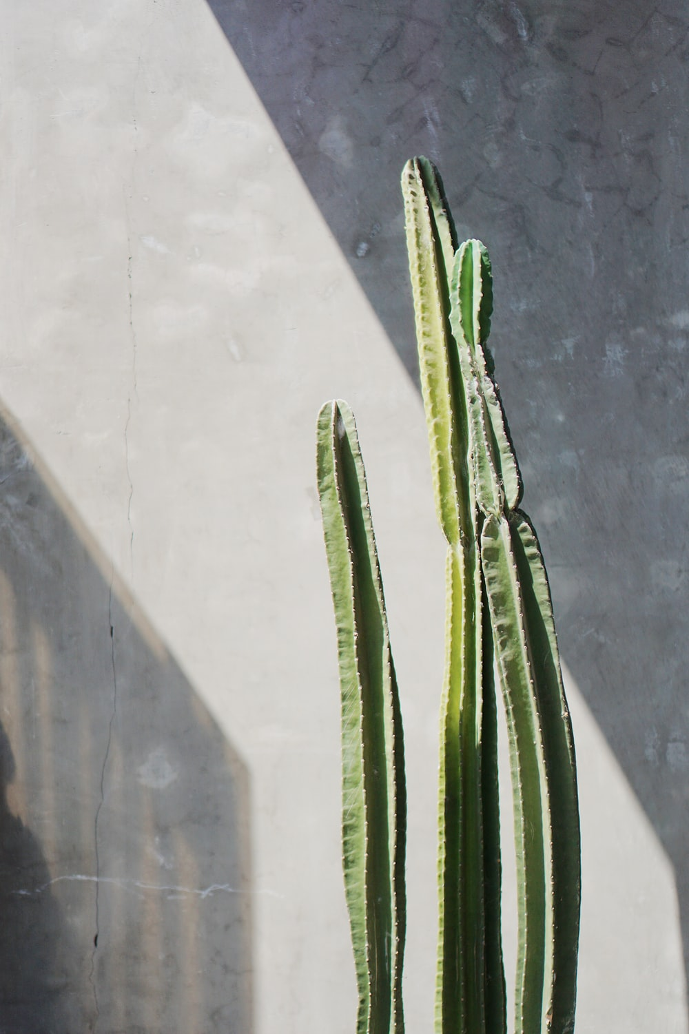 green cactus plant on gray concrete wall