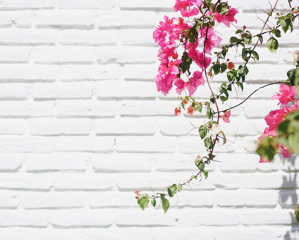 Pink And Green Flower On White Wall Photo Free Image On Unsplash