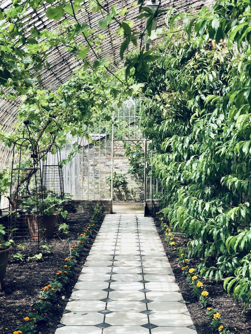 green plants on gray concrete pathway
