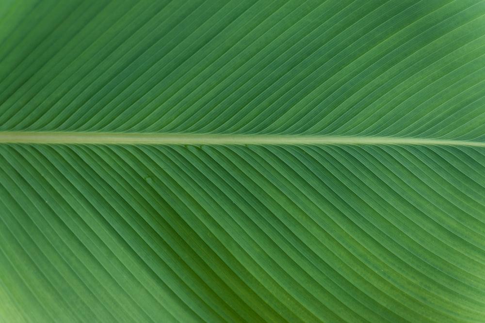 green leaf in close up photography
