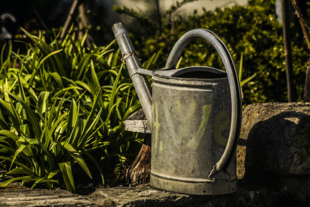 gray watering can on brown wooden log