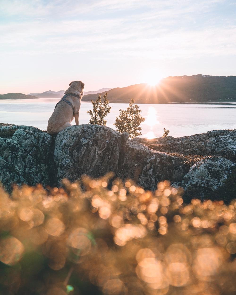 brown short coated dog on brown rock formation during daytime