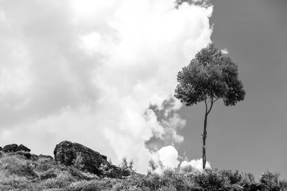 grayscale photo of tree on hill