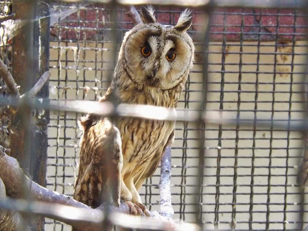 brown owl on gray metal cage