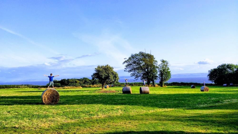 brown hays on green grass field under blue sky during daytime