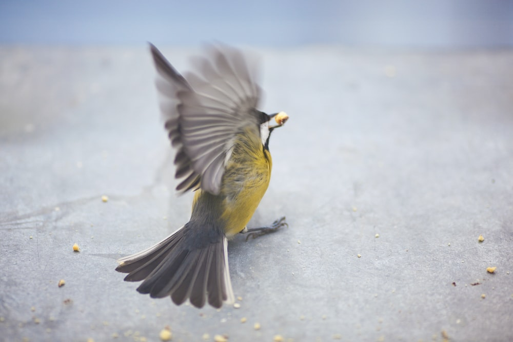 yellow and gray bird flying on snow covered ground during daytime