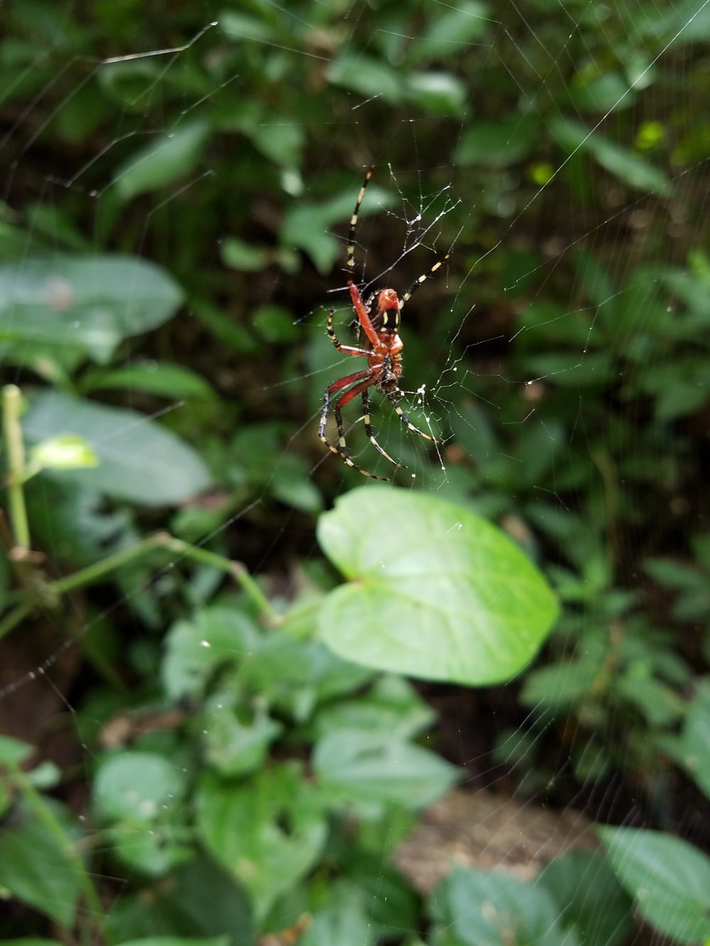 red and black spider on green leaf during daytime