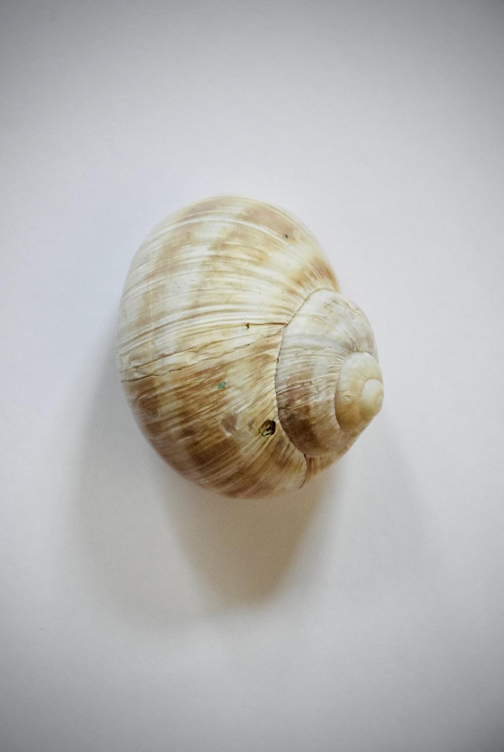 brown and white seashell on white textile