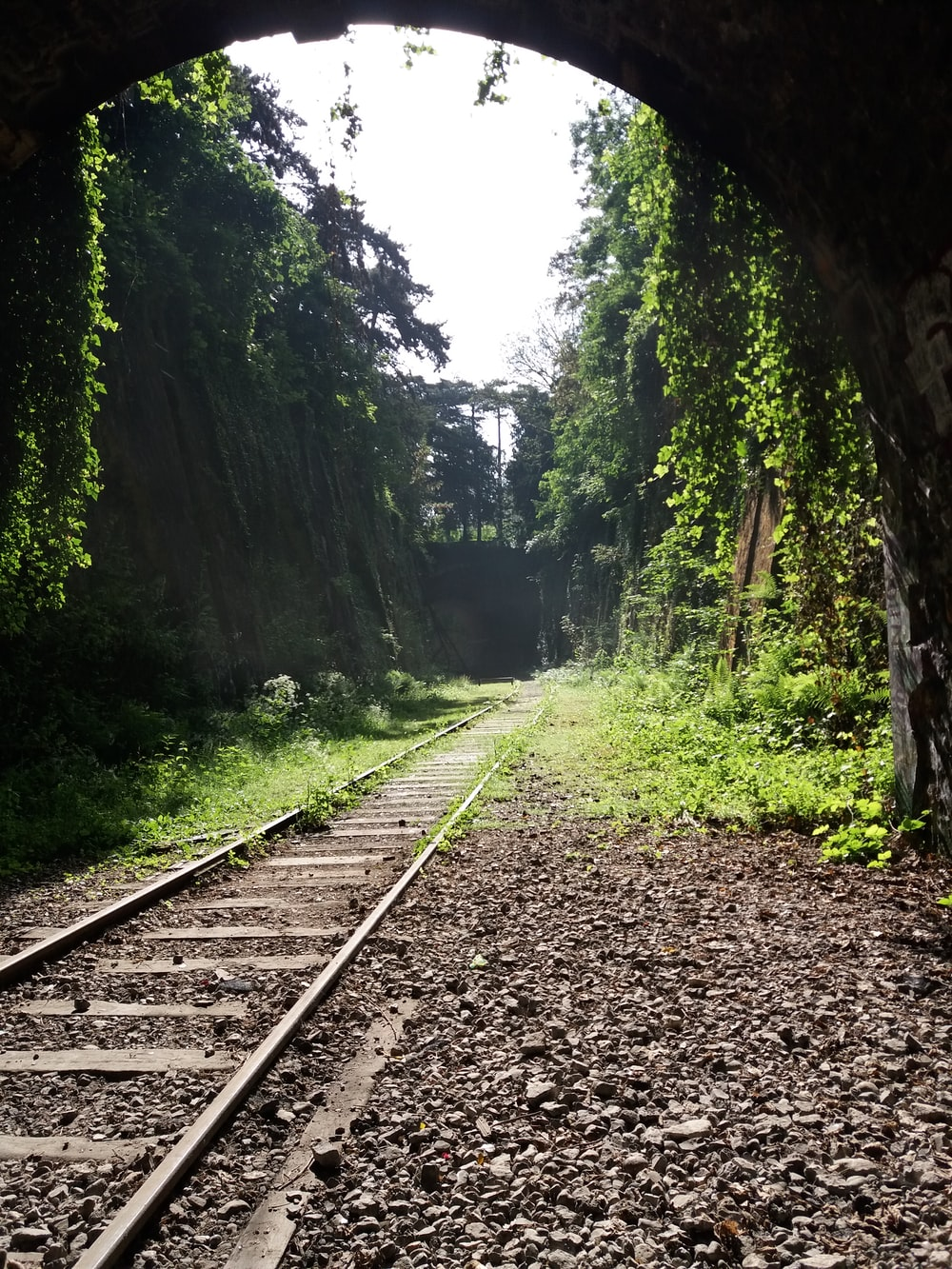 train rail in the forest