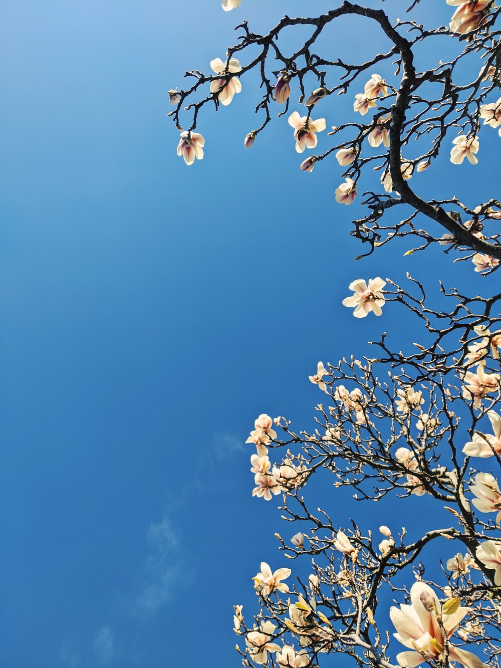 white flowers on tree branch under blue sky during daytime