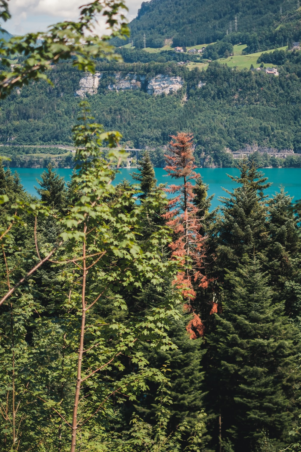 green and red leaf trees near body of water during daytime