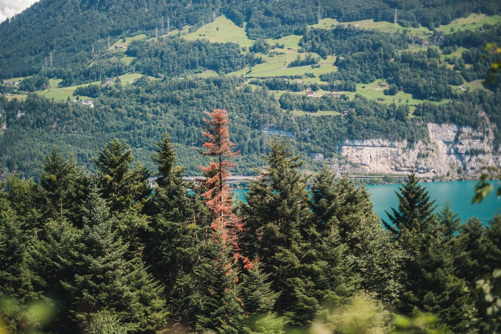 green and red trees near lake during daytime