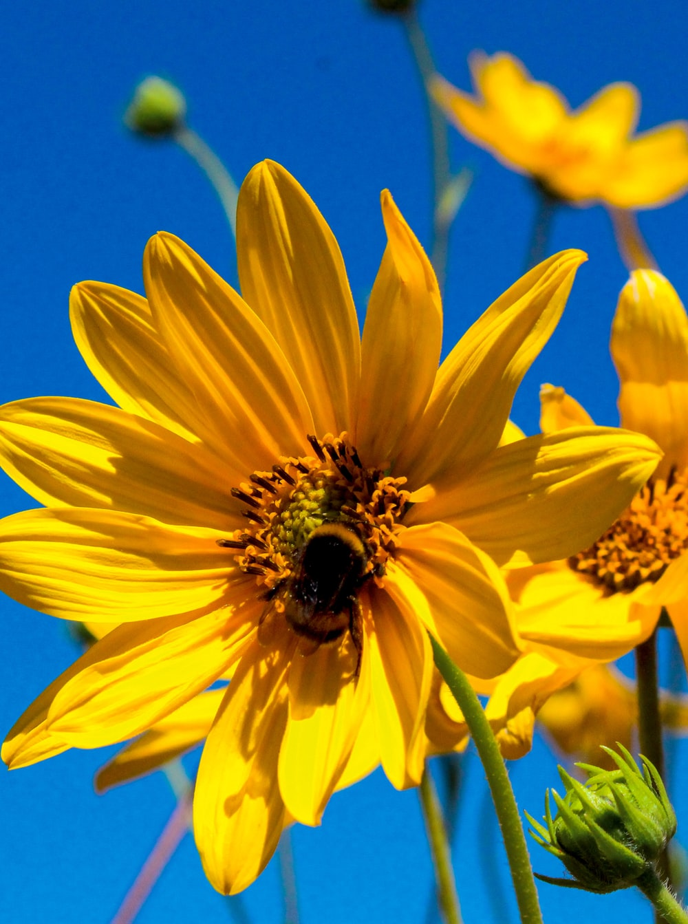 yellow sunflower under blue sky during daytime