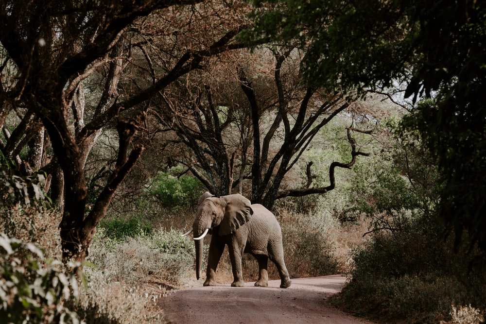 elephant walking on road near bare trees during daytime