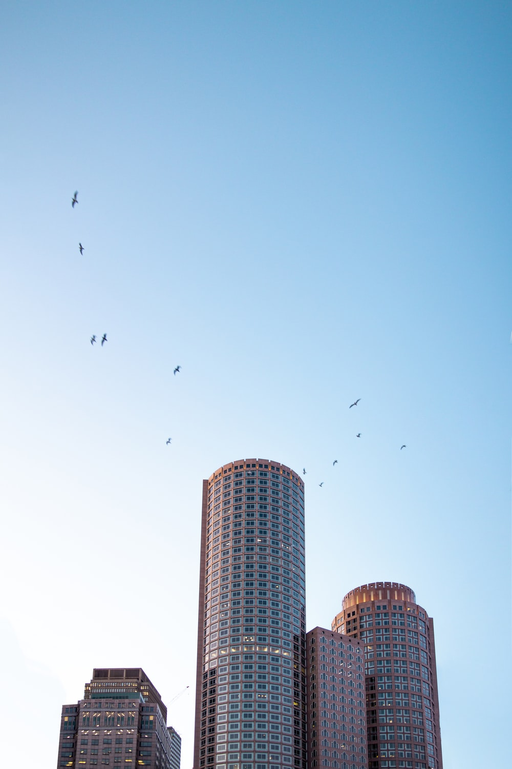 birds flying over high rise building during daytime